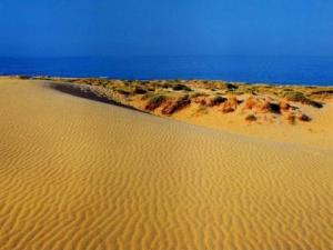 Les dunes d'Elche